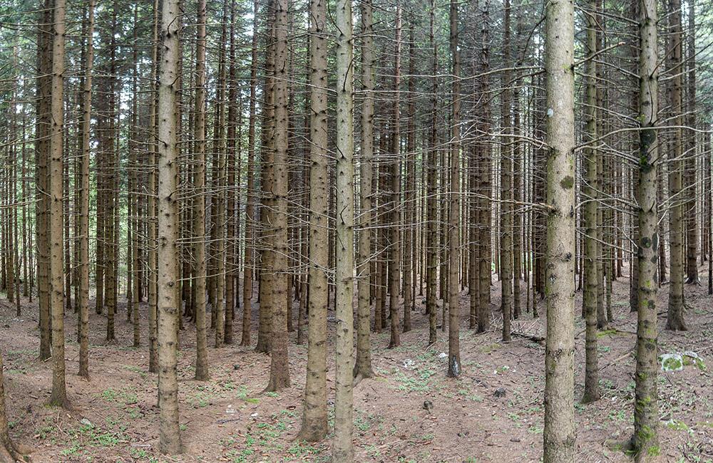 Mizarstvo Jesenko - Tržič - Gozd - les